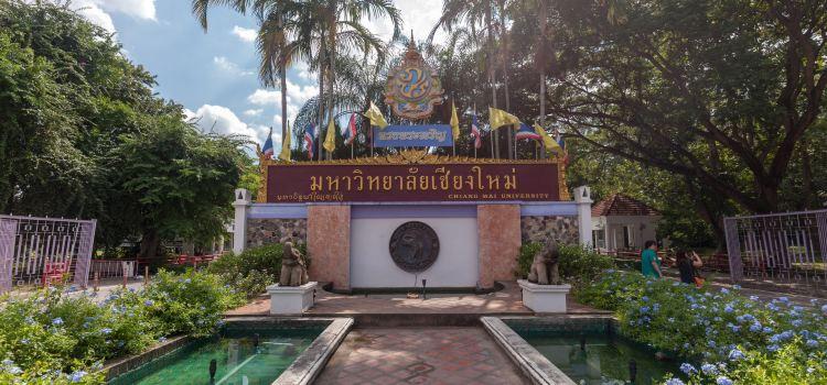 Chiang Mai University1