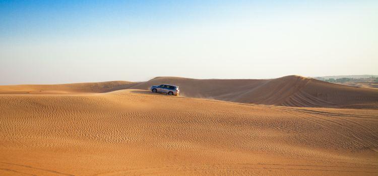 두바이 사막 보존 지역3