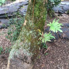 Kaumana Caves Park用戶圖片