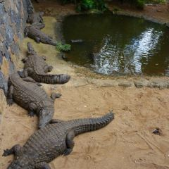 David Fleay Wildlife Park User Photo