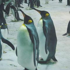 星海公園用戶圖片