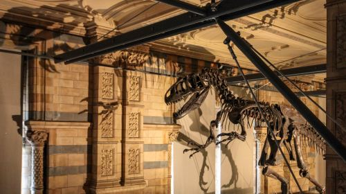 自然歷史博物館
