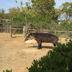 상하이 야생 동물원 여행 사진