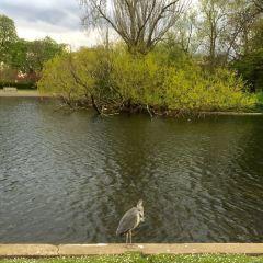 Regent's Park User Photo