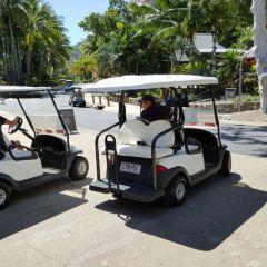 漢密爾頓島免費巴士用戶圖片