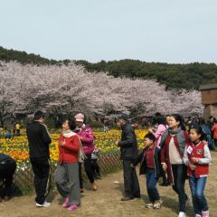Shangfangshan Hill National Forest Park User Photo