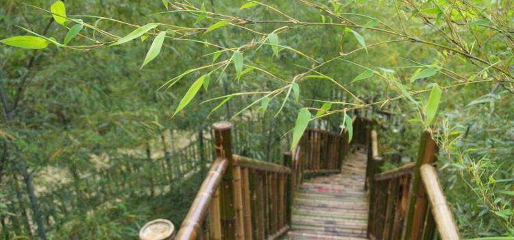 竹尖玻璃棧道1