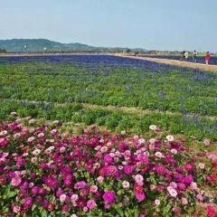 Fenghuang Flower Sea User Photo