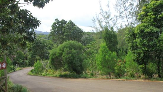 Montefiore Hill