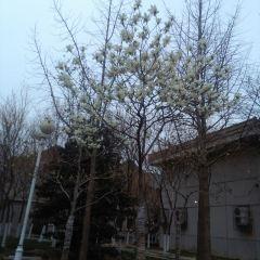 허난 대학 여행 사진