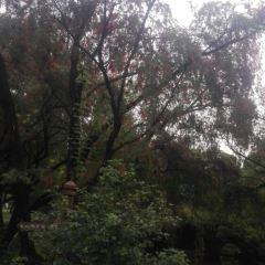 洪家山森林公園用戶圖片