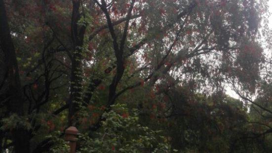 洪家山森林公園