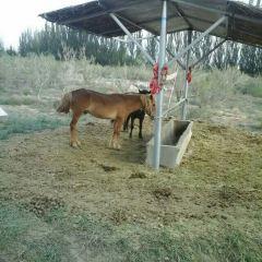 神州荒漠野生動物園用戶圖片