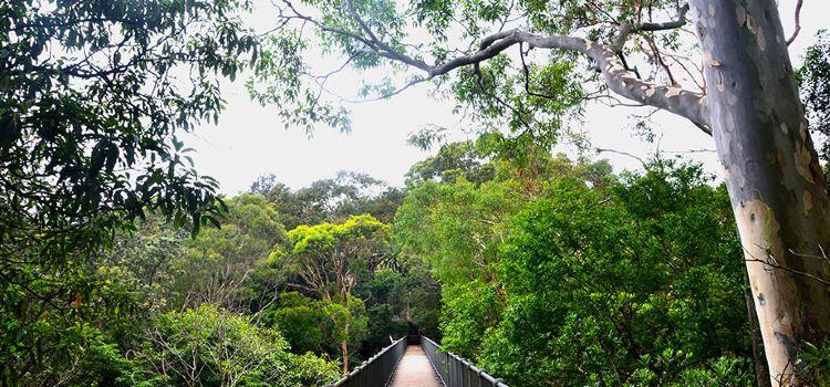 Cremorne Point to Mosman Bay Walk1