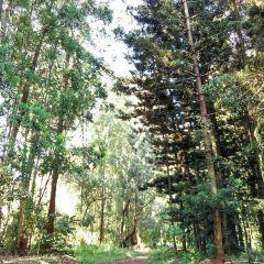Karura Forest用戶圖片