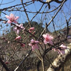 Peach Blossom Lake User Photo