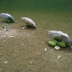 九龍溪用戶圖片