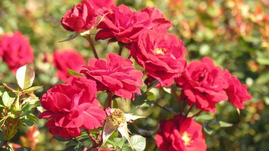 Rose Centre