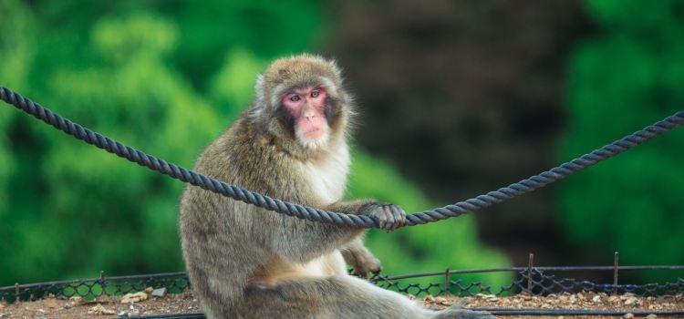 嵐山岩田山猴子公園1