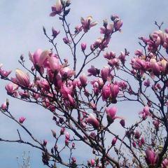 Donggao Park User Photo