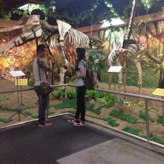 Panyu Museum User Photo