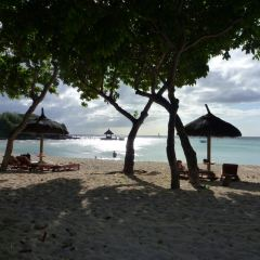 熱帶研究與保護中心用戶圖片
