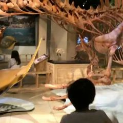 National Geographic Museum User Photo