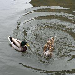 Regent's Canal User Photo