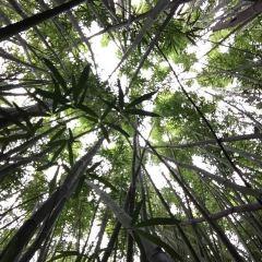 竹林用戶圖片