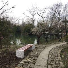 西溪國家濕地公園用戶圖片