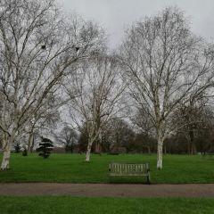 Hyde Park User Photo