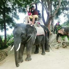 Thai Elephant Conservation Center User Photo