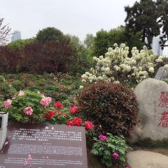 東湖牡丹園用戶圖片