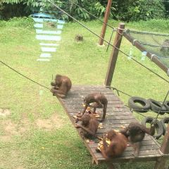 西必洛猿人保護區用戶圖片