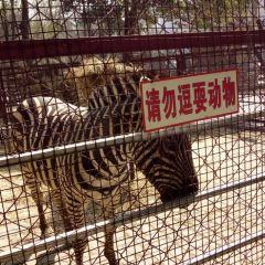 六盤水動物園用戶圖片