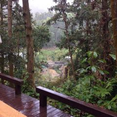 라벤더 삼림 여행 사진