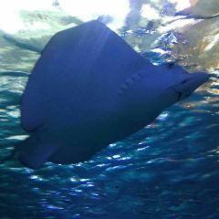 Aqua Planet Jeju User Photo