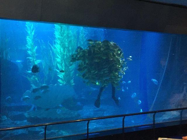 칭다오 해저세계/언더워터월드