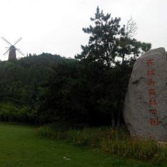 東坡頭森林公園用戶圖片