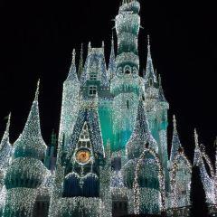 Camp Disney User Photo