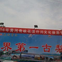 스촨 배밭 여행 사진