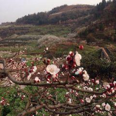 체리 협곡 휴양촌 여행 사진