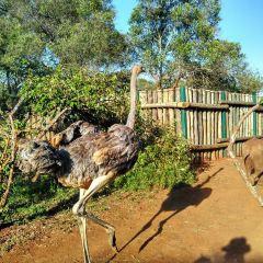 動物孤兒院用戶圖片