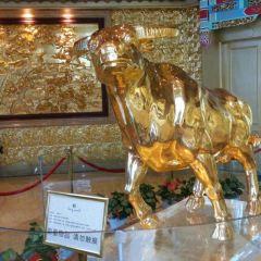 華西龍希大酒店觀光區用戶圖片