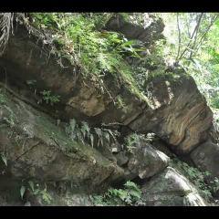 Caribbean National Forest用戶圖片