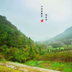 楊家村用戶圖片