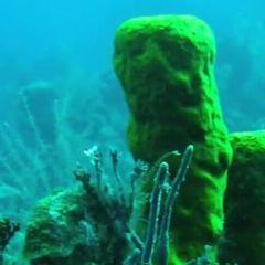 Andros Barrier Reef User Photo