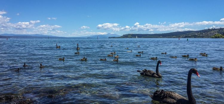 Great Lake Taupo1
