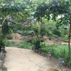 Jurassic Garden User Photo