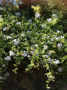 桂尔宫-西班牙-lotus